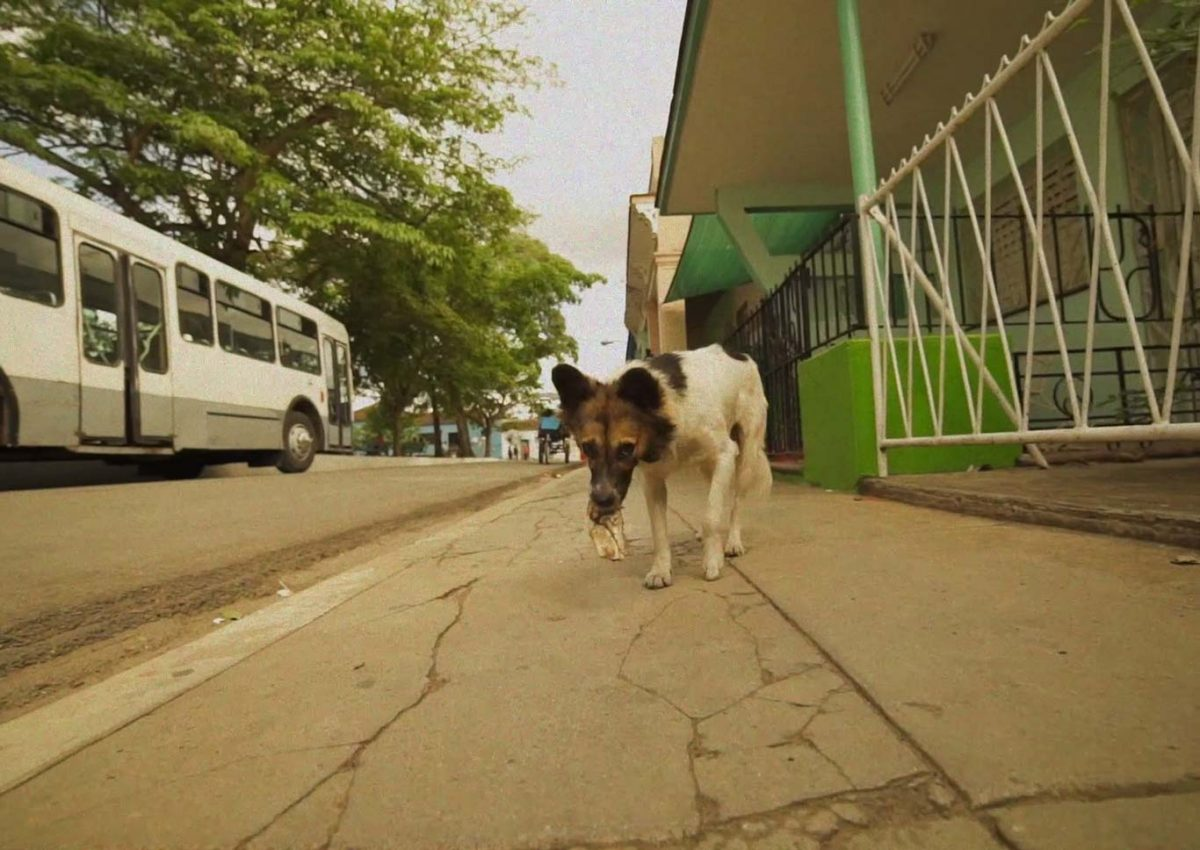 A Day a Dog in Cuba