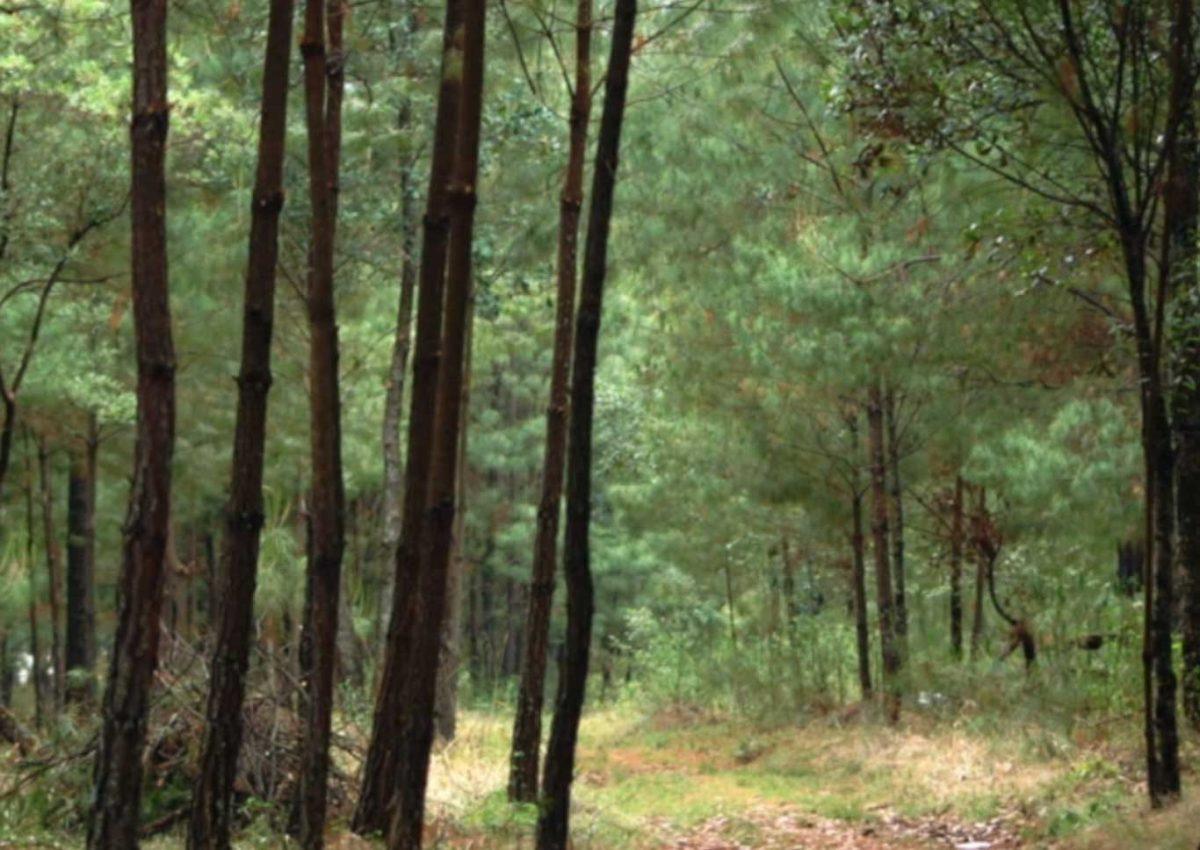 Los Arboles No Dejan Ver El Bosque Festival Internacional Del Nuevo Cine Latinoamericano