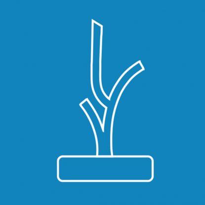 Premios Corales 39 edición del Festival